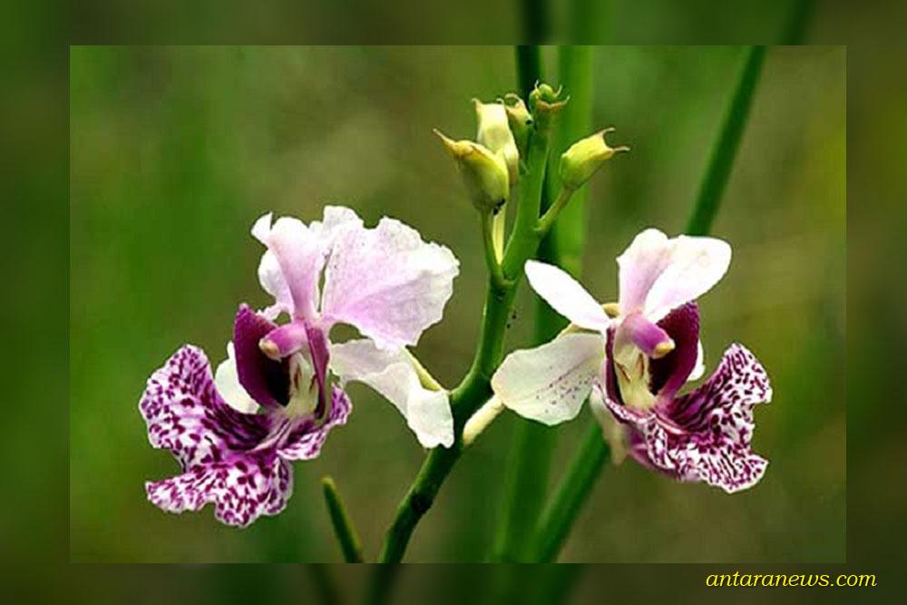 tropical rainforest orchids
