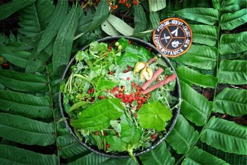 Wild edible greens salad