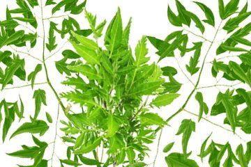 edible ornamental plant