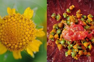 Wild Edible Flower Sambal